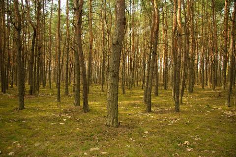 bosque-polonia-primavera.jpg